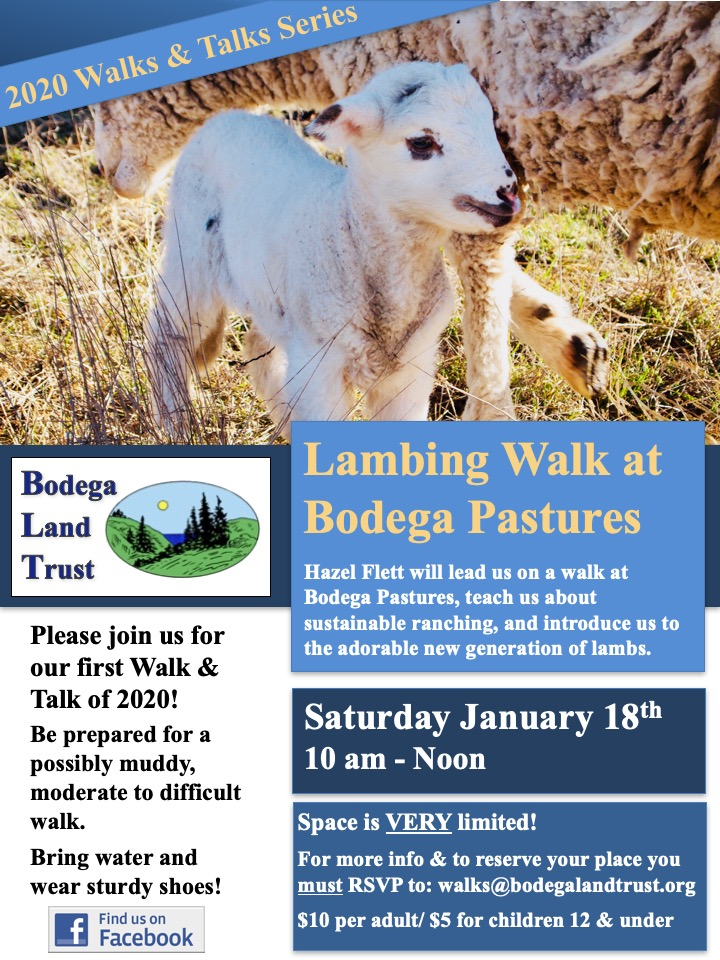 January 2020 Lamb Walk